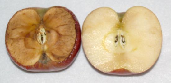 apple-half, oxadized apple, oxidization in an apple